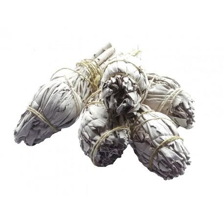 Biała Szałwia - Salvia Apiana pęczek